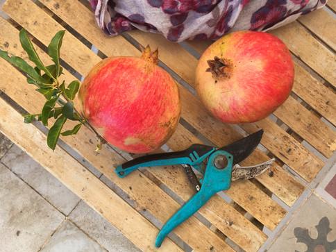 Garden produce, Casa Isadora, Spain.