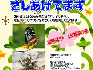 蝶のおせったいのまちプロジェクト