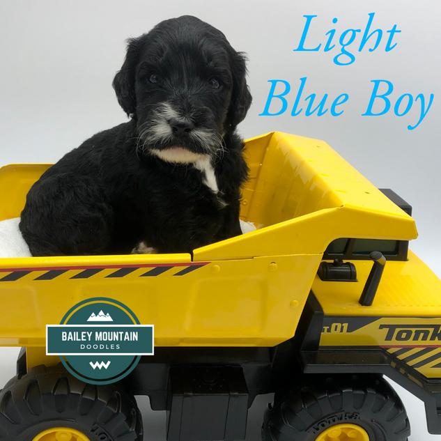 Light Blue Boy