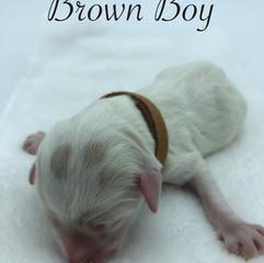 Brown Boy.jpg