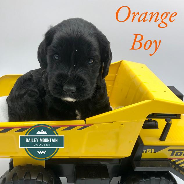 Orange Boy