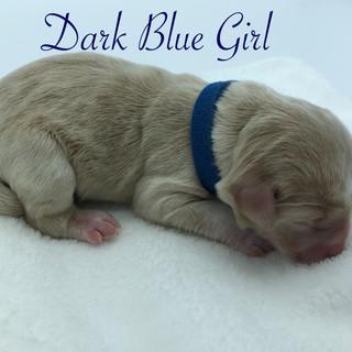 Dark Blue Girl.jpg