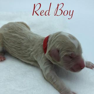 Red Boy.jpg