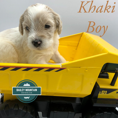Khaki Boy