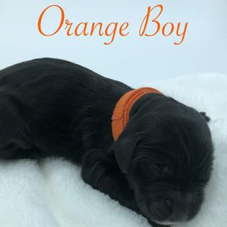 Orange Boy.jpg