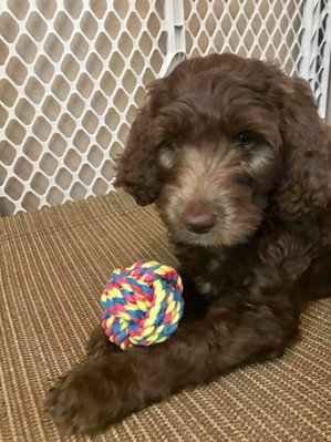 Gracie Pup