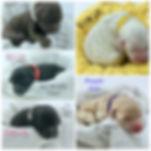 972D61AA-4A22-401C-95E9-9952493E8021.jpe