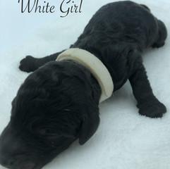 White Girl.jpg