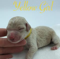 Yellow Girl.jpg