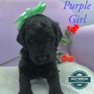 Purple Girl
