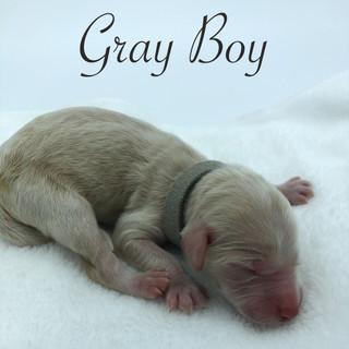 Gray Boy.jpg