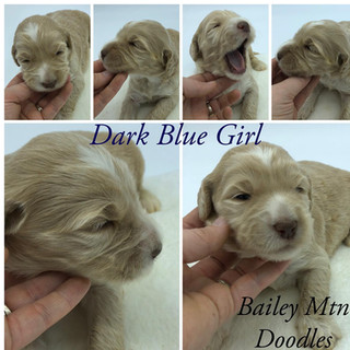 Dark Blue Girl