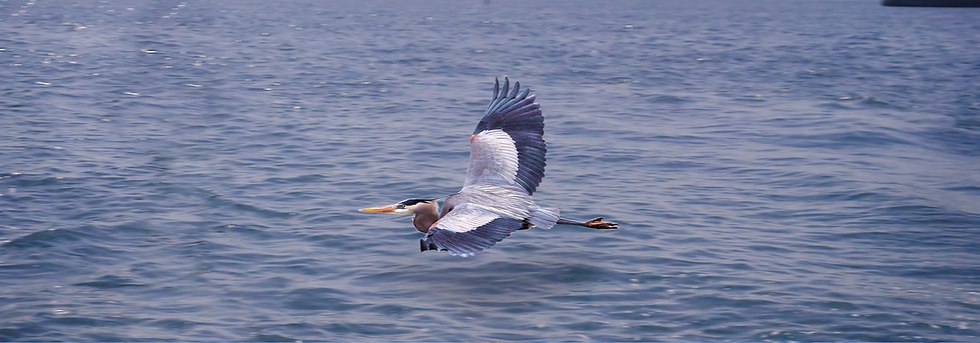 SecondaryPagePhotos-Heron2.png