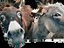 pexels-pixabay-208821_edited.png