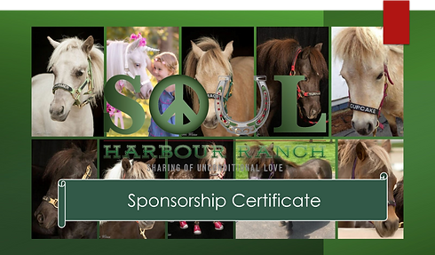 sponsorship certificate.png