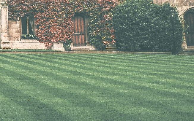 Lawn_edited.jpg