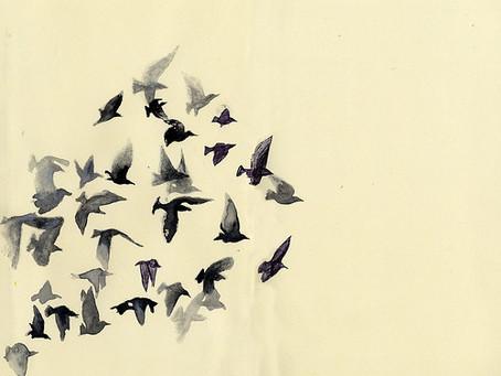 Freedom -An Invitation