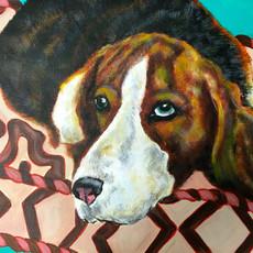 Beagle on Pillow