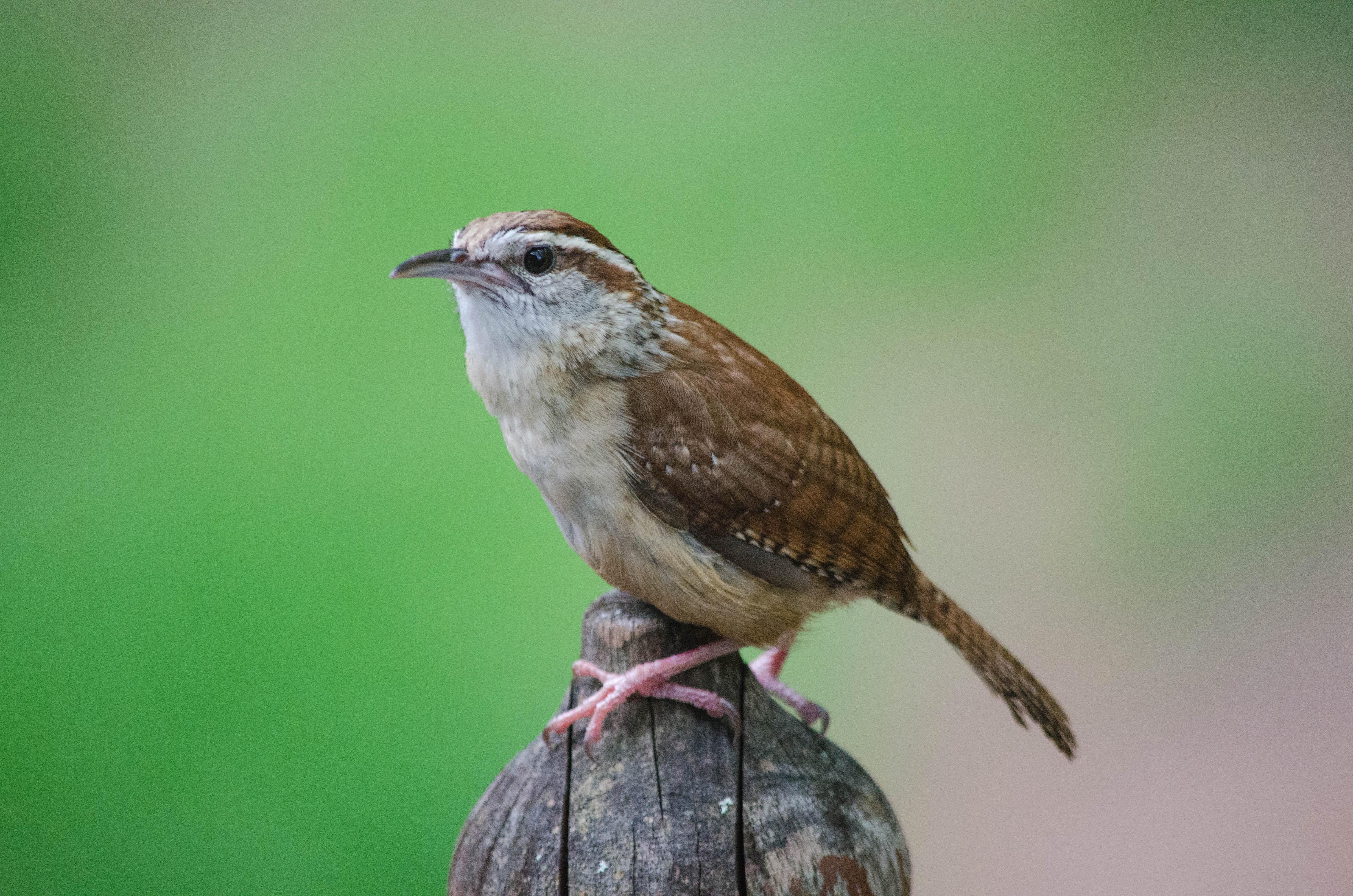 Bird Bud