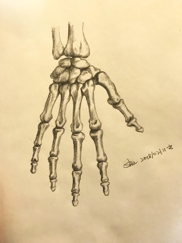 Sketch for Bones