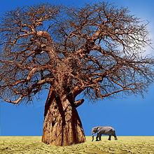 elephant-4102386_1920 5 carré.jpg