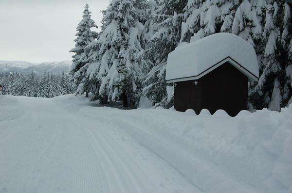 New Snow!