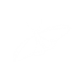 Butterfly-white.png