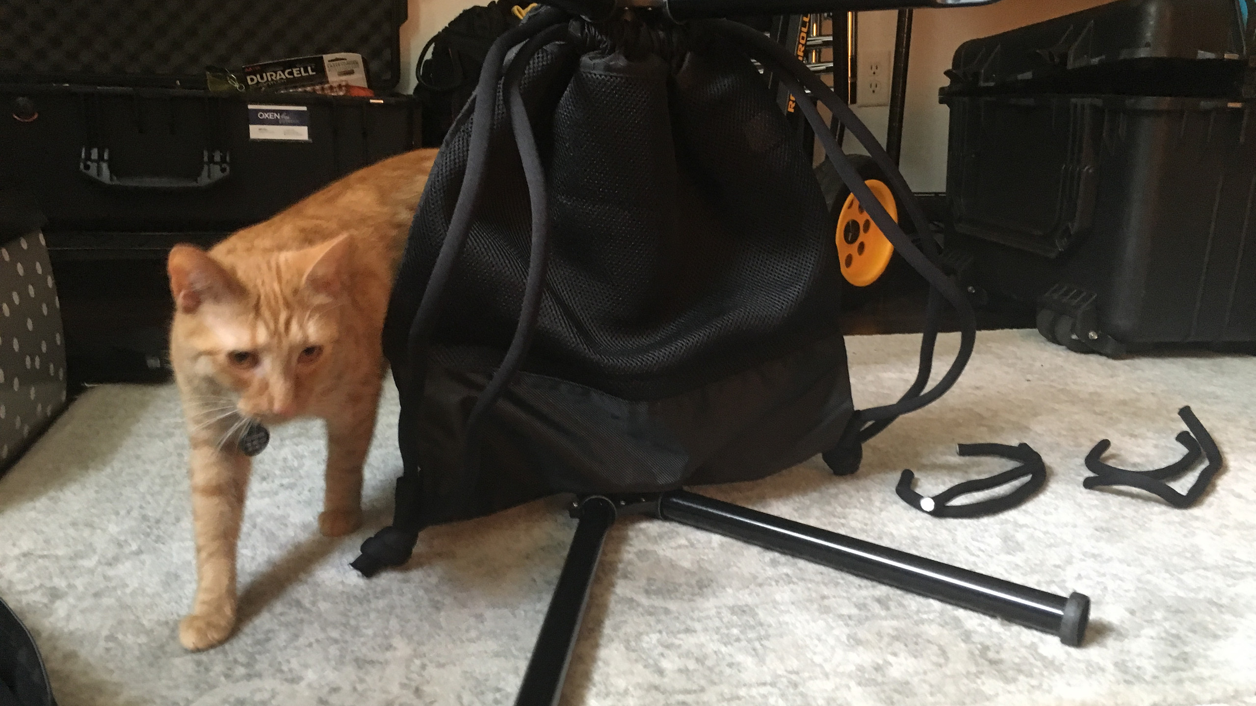 Final stand bag (cat not included)