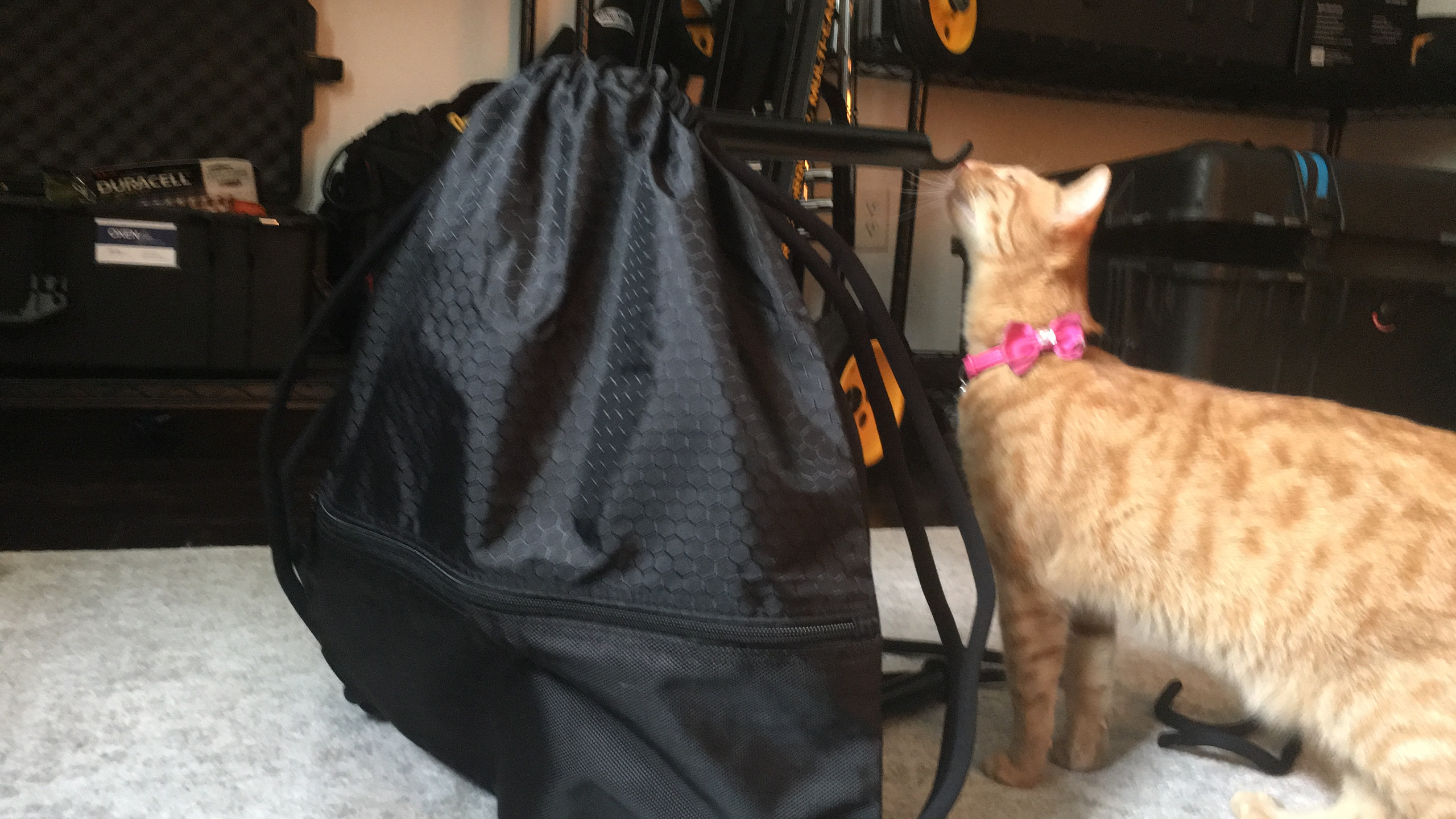 Final stand bag (cat approved)