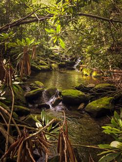 Newberry Creek