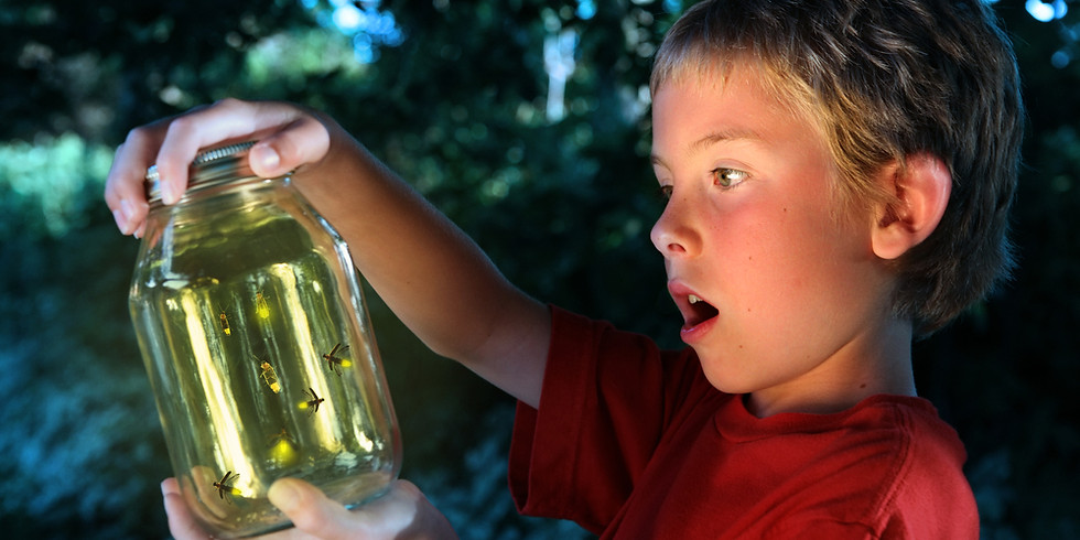 Firefly Discovery Camp