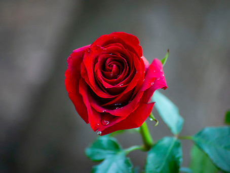 Using Roses During Healing & Meaning Of Rose Colors