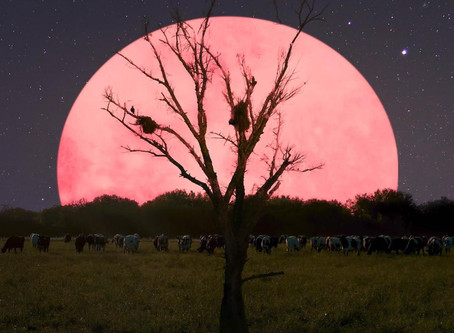 Energy Update: The Pink Full Supermoon
