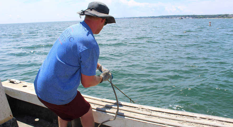 Michael Hand Hauling an Oyster Tray
