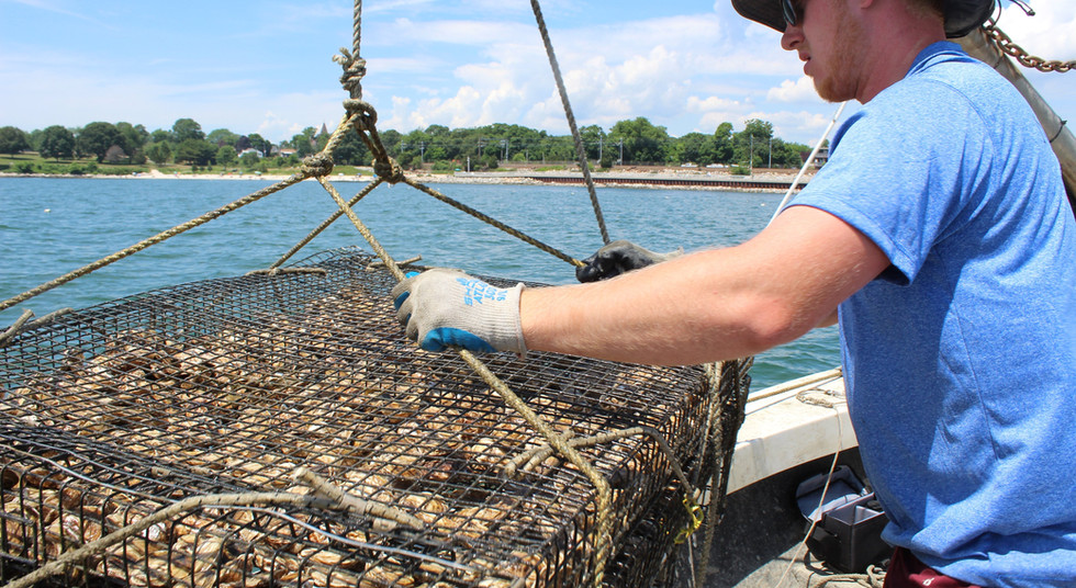 """Michael Hauling Oyster Tray onto the """"Marie Elizabeth"""""""
