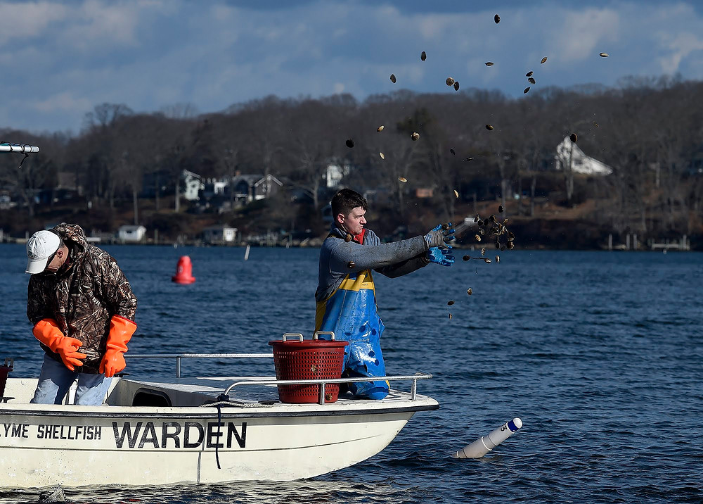 Tim Londregan tossing handfulls of Niantic Bay Scallops into the Niantic River from a boat