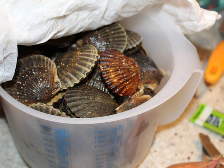 The Niantic Bay Scallop: Preparing Your Scallops