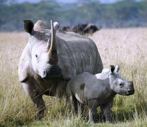 'Blackeyes' Helikites Flying to Help Protect African Rhinos