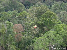 Jungle marker Helikite from air.JPG