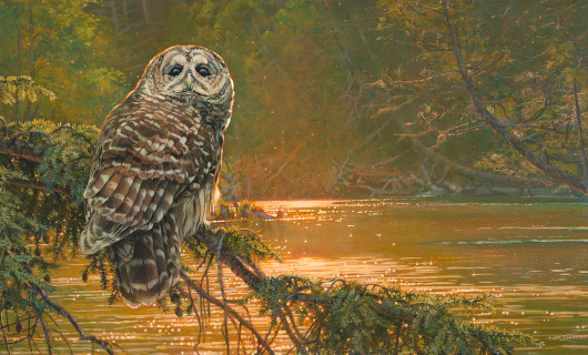 State Park Owl
