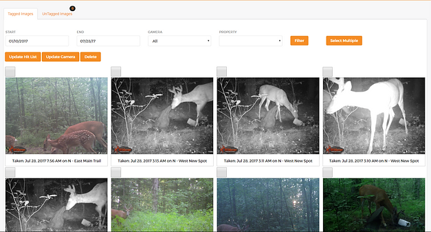 Hunt Perfect | Image Library