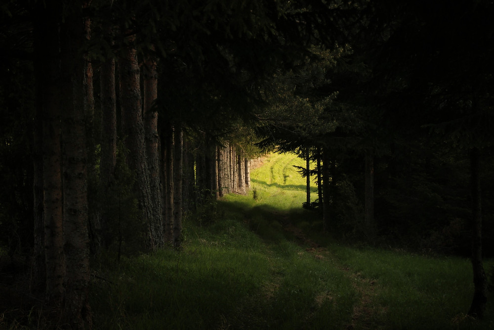 Grassy path to light, through a tunnel of dark trees.