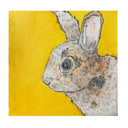 Rabbit on Yellow-Susan Shoemaker