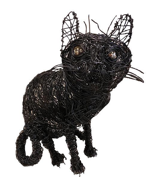 Black Cat-Josh Cote