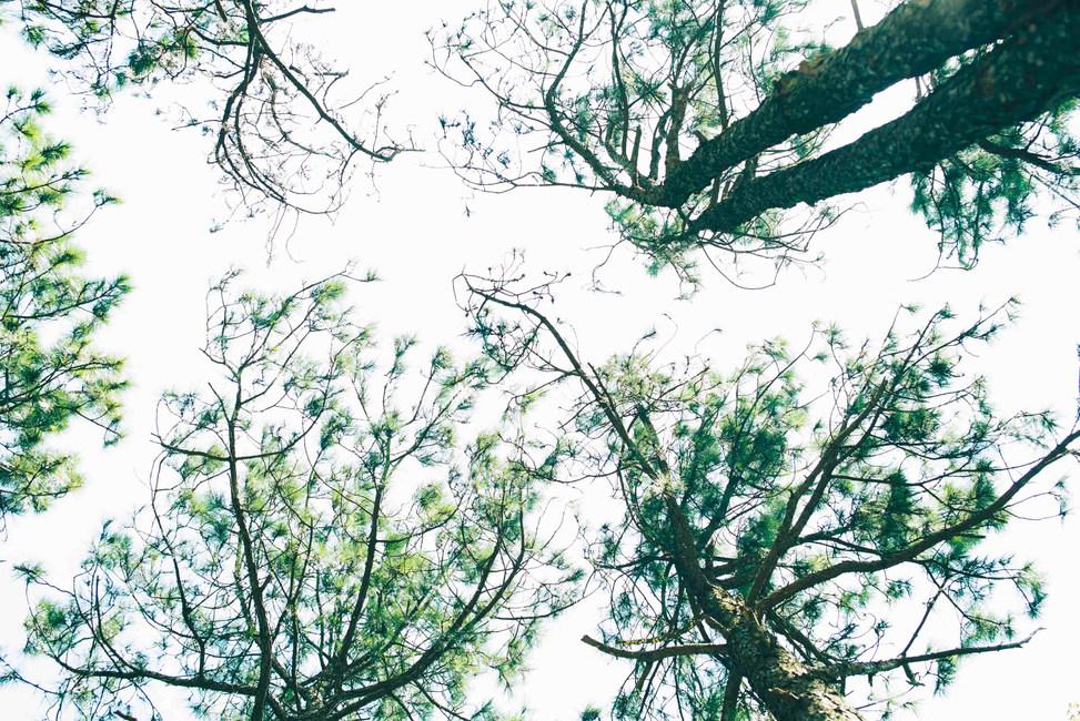 RiverYangPhoto 98.JPG