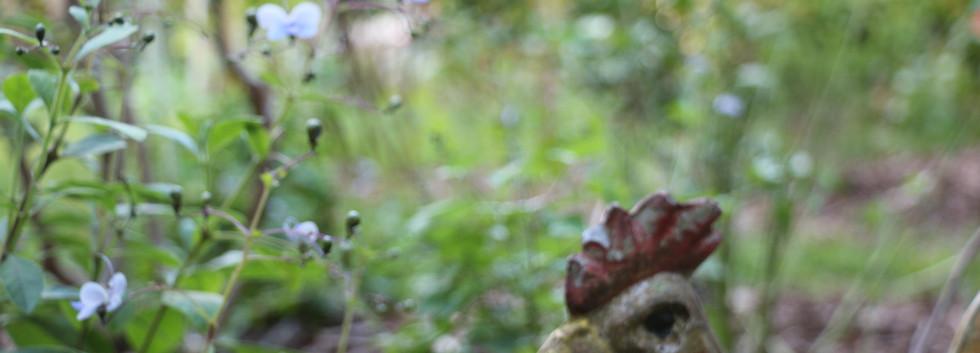 gardenrooster.JPG
