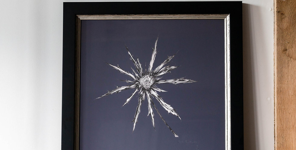 ERYNGIUM - on slate grey -Limited Edition Print