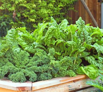 Gresh Salad Greens