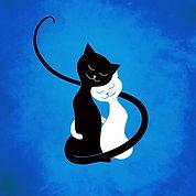 Cat10.jpg