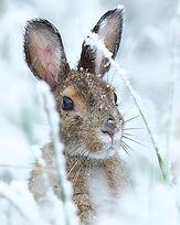 WinterBunny.jpg